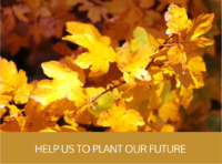 Help us to plant our future