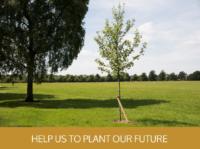 Help us to plant - tree