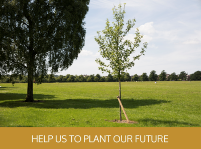 Help us to plant - tree