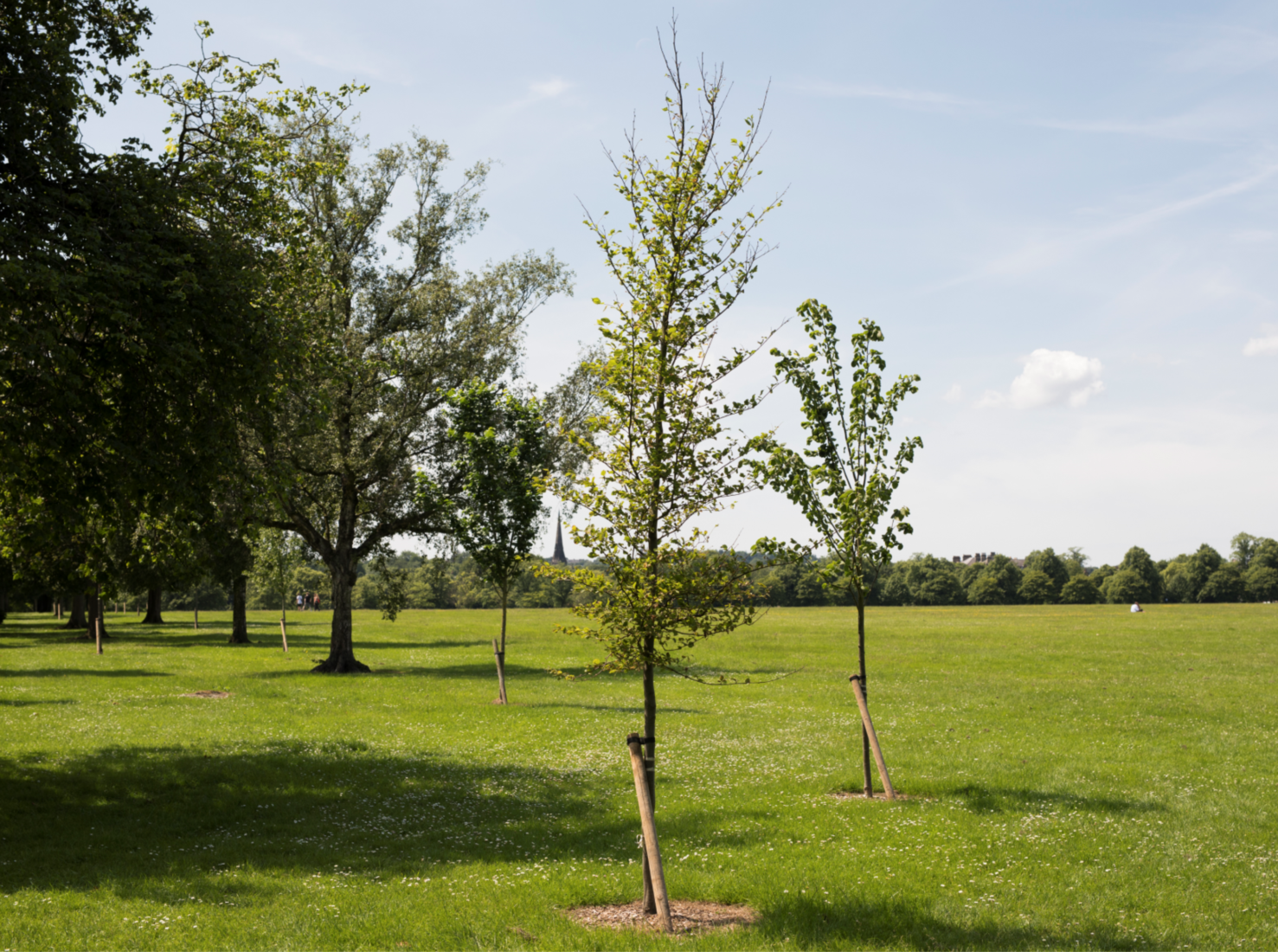 Your Tree Dedications – Harrogate International Festivals